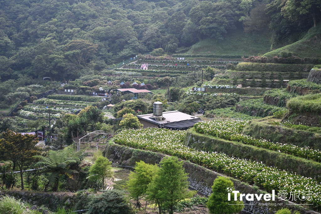 大梯田花卉生態農園 Taipei Hydrangea Terraced Fields (7)