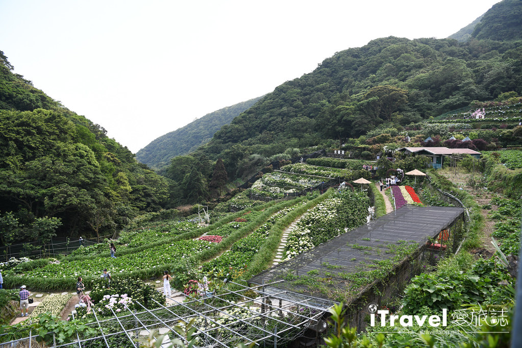 大梯田花卉生態農園 Taipei Hydrangea Terraced Fields (14)