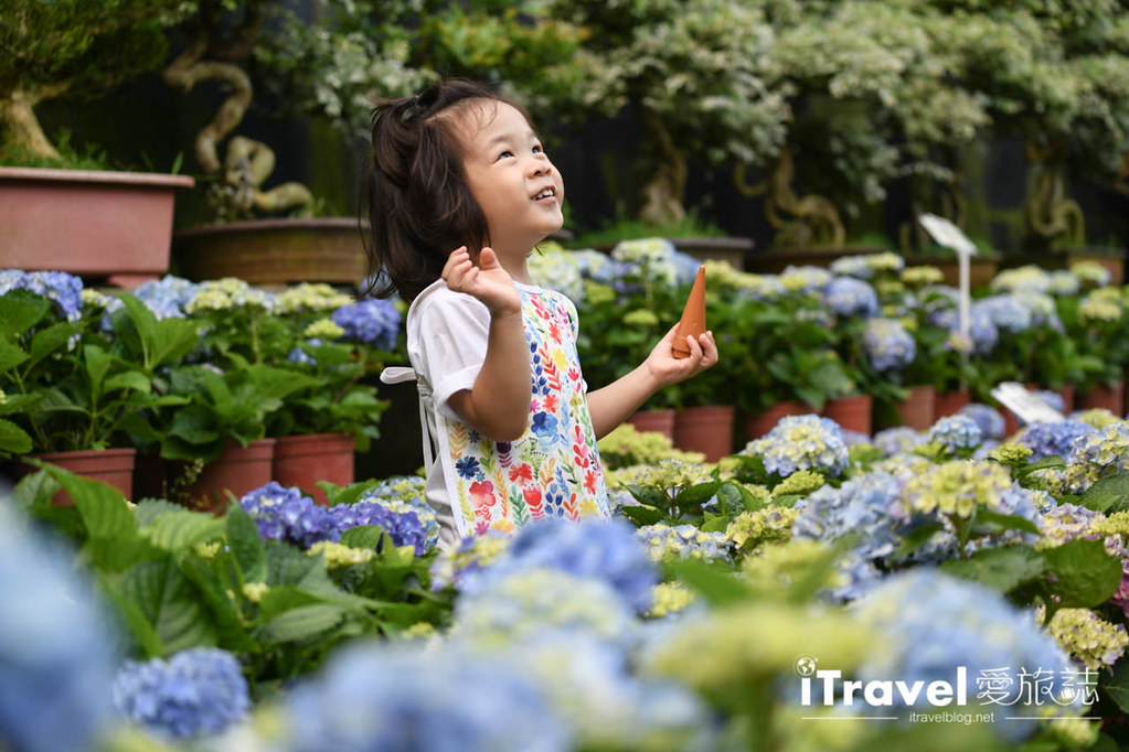 大梯田花卉生態農園 Taipei Hydrangea Terraced Fields (76)