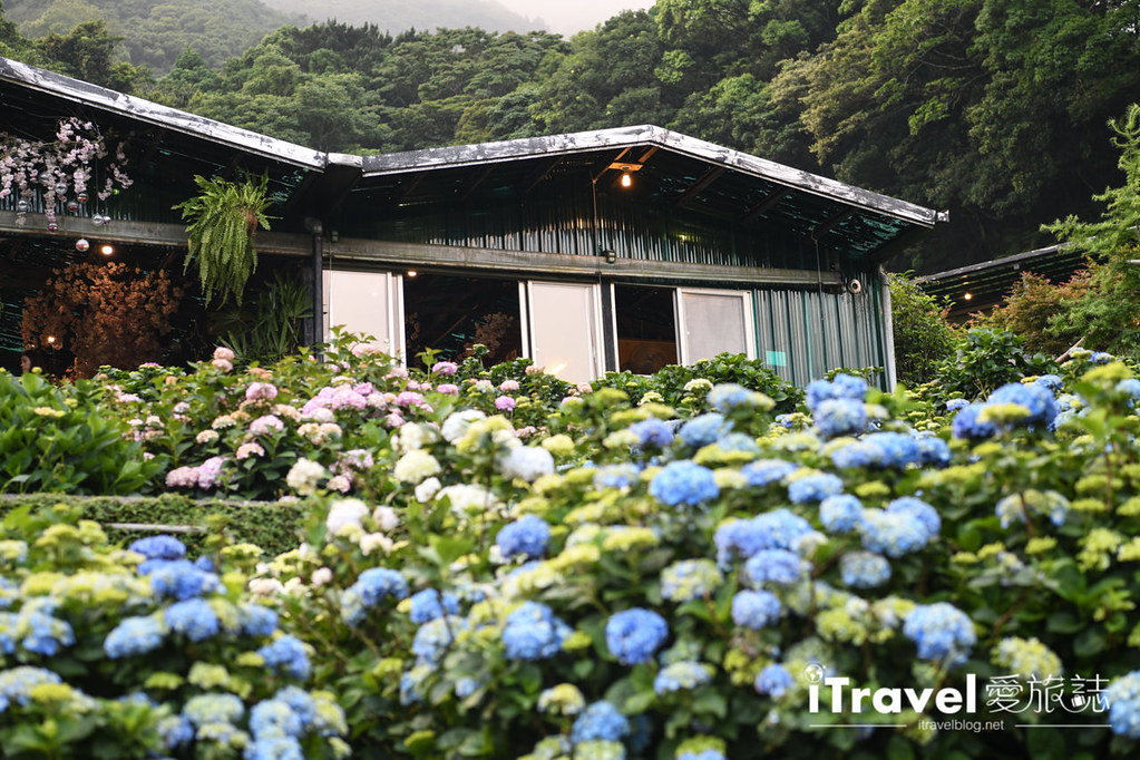 大梯田花卉生態農園 Taipei Hydrangea Terraced Fields (68)