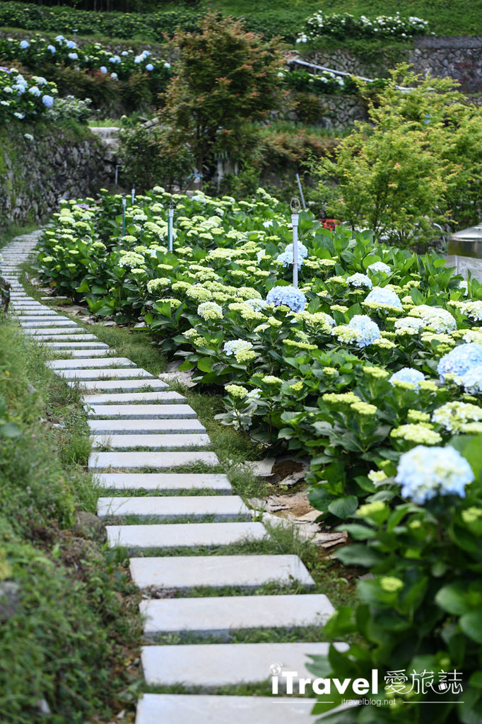 大梯田花卉生態農園 Taipei Hydrangea Terraced Fields (28)