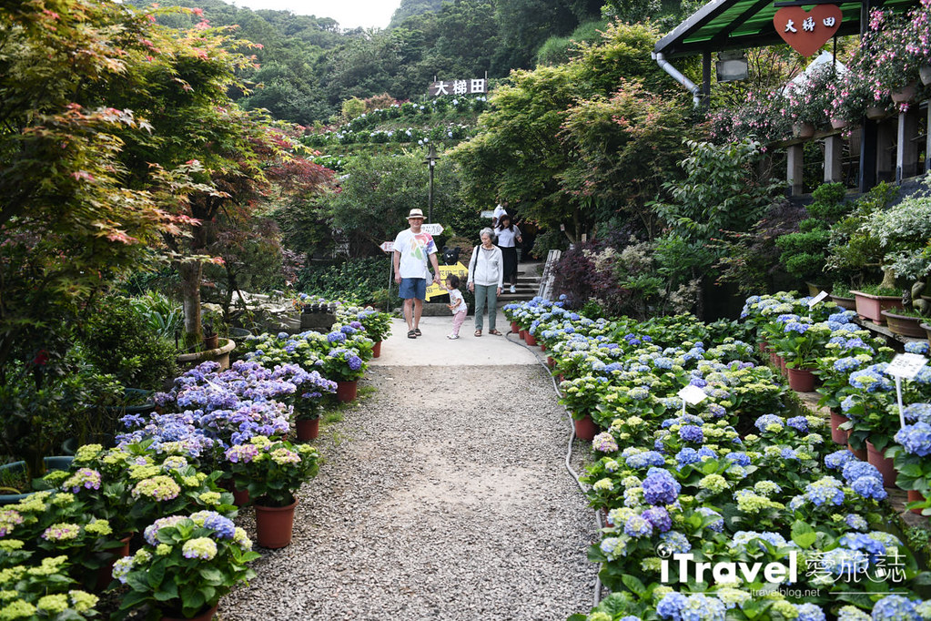 大梯田花卉生態農園 Taipei Hydrangea Terraced Fields (19)