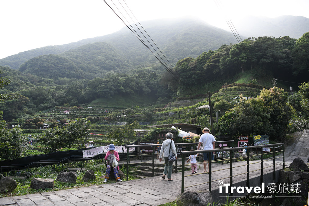 大梯田花卉生態農園 Taipei Hydrangea Terraced Fields (9)