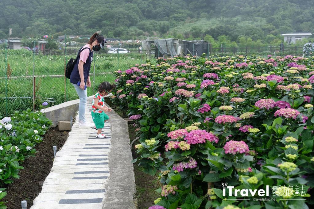 頂湖財福繡球花園 Jai Fu Garden (55)