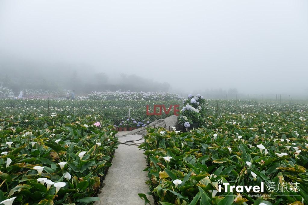 頂湖財福繡球花園 Jai Fu Garden (25)