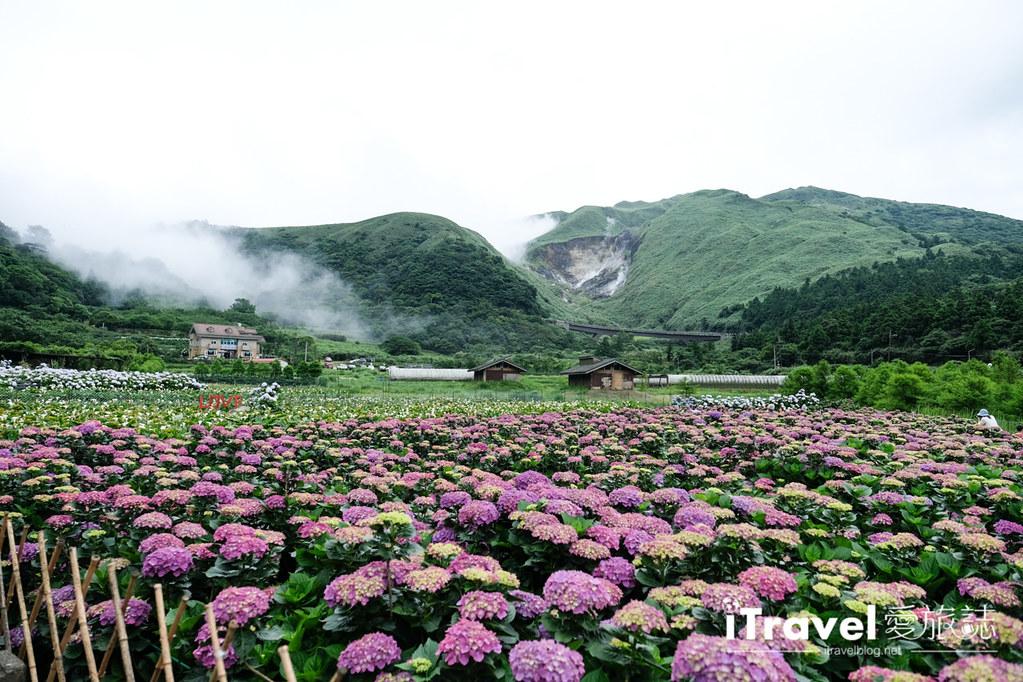 頂湖財福繡球花園 Jai Fu Garden (88)