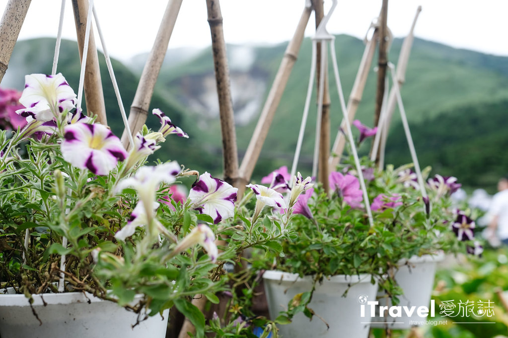 頂湖財福繡球花園 Jai Fu Garden (83)