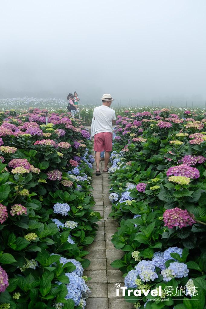 頂湖財福繡球花園 Jai Fu Garden (70)