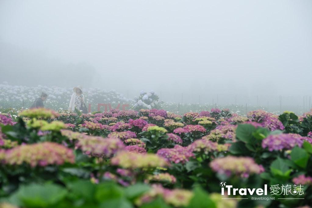 頂湖財福繡球花園 Jai Fu Garden (67)