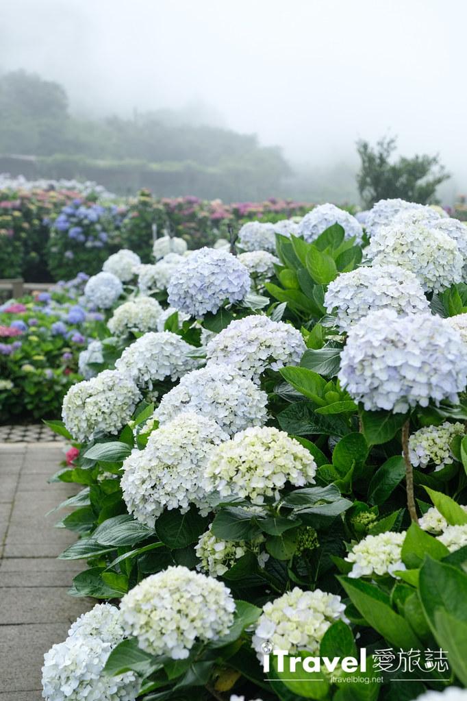 頂湖財福繡球花園 Jai Fu Garden (54)