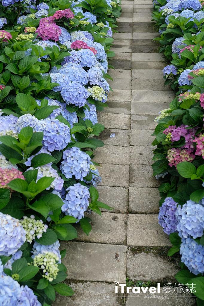 頂湖財福繡球花園 Jai Fu Garden (47)