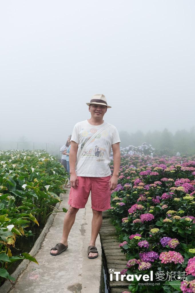 頂湖財福繡球花園 Jai Fu Garden (29)