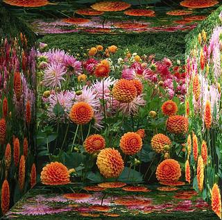 Flowers in Mirror Image