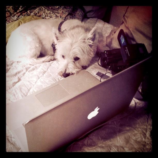 Multimedia terrier by Jannet Walsh