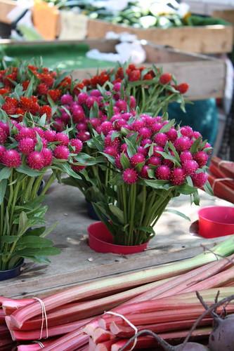 flowers, rhubarb