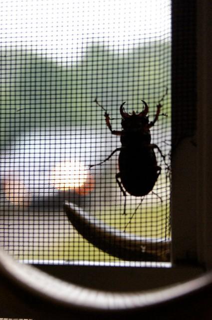 Walter Doogan - Beetle