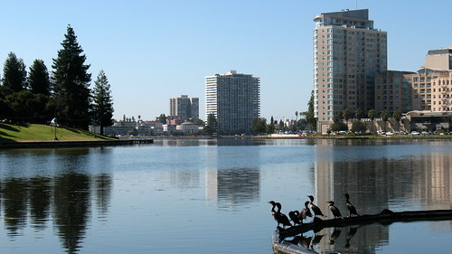 Birds on Lake Merritt, Oakland, CA