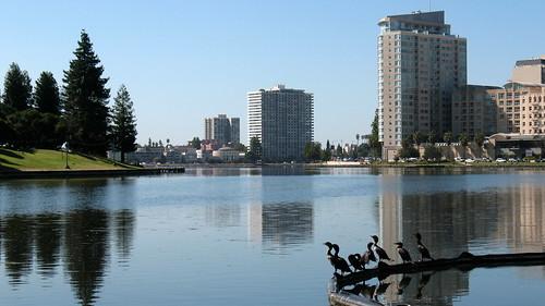 Birds on Lake Merritt, Oakland, CA