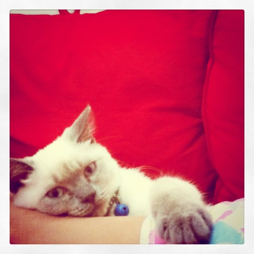 kittycat making use of my left leg as pillow ;)