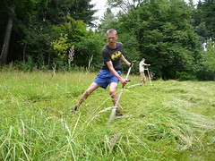 mowing with Russian scythe