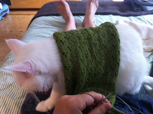 Laban wearing a green sleeve
