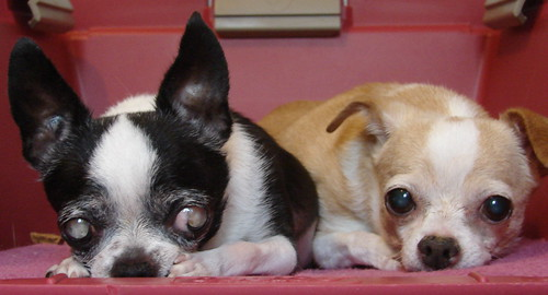 Kiko and Taco