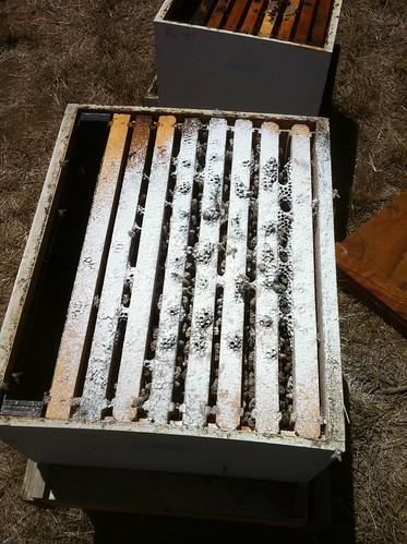powdered hive