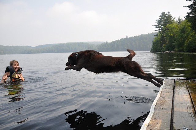Bahia, the water dog that she really is