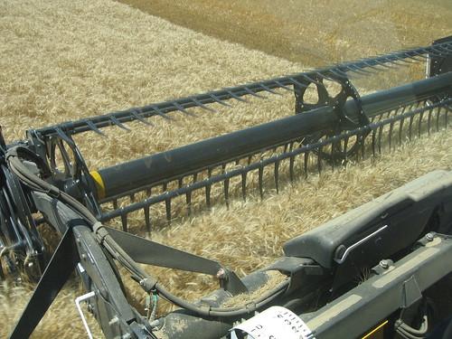 Colorado crop from combine cab.