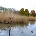 Austin Roberts Bird Sanctuary 3