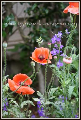 WM Spring Flowers 7