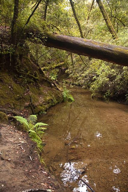 Big Basin Riverbed
