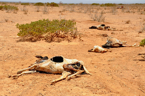 East Africa Food Crisis - Somaliland
