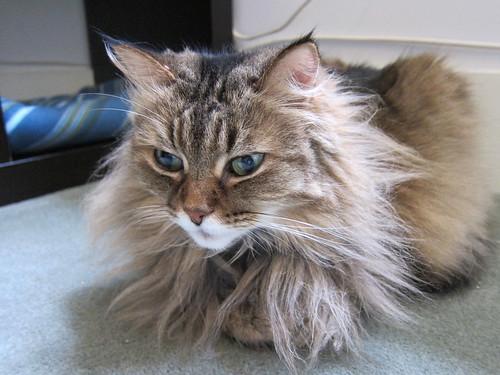 Raggedy Cat
