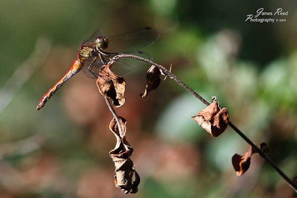 A dragonfly outside my window.