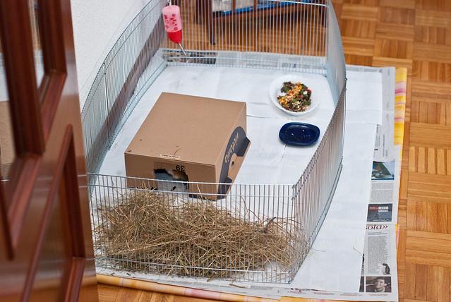 Casa para cobayas hecha con una caja de zapatos