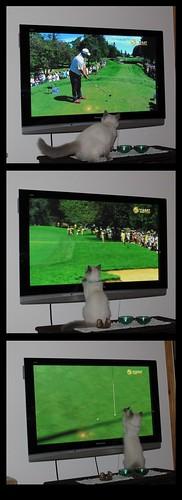 Solan watching golf