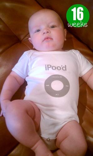 iPood - 16 weeks