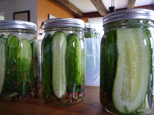 Dill pickles - Filled jars