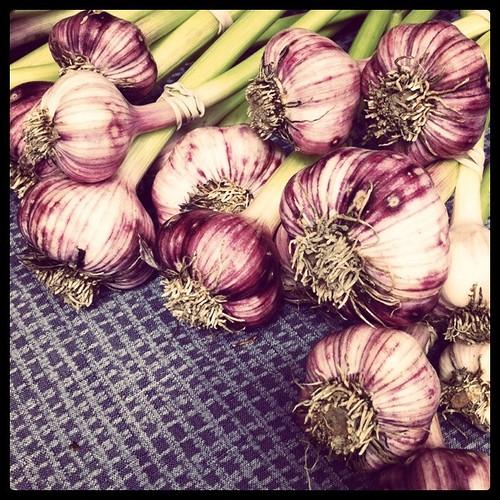 Beautiful garlic