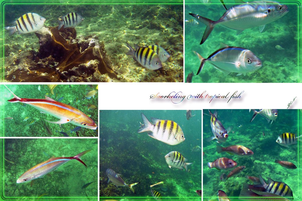 Snorkeling with tropical fish_edited-1