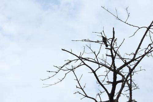 A23 - Negative Space - Crow