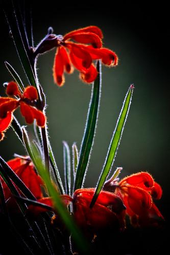 red drops by Matt Hovey (on hiatus. back soon!)