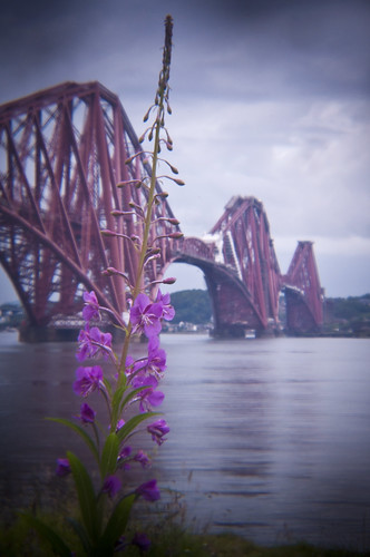 Forth Bridge Holga