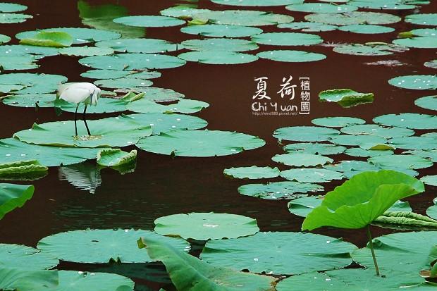 台北植物園16.jpg