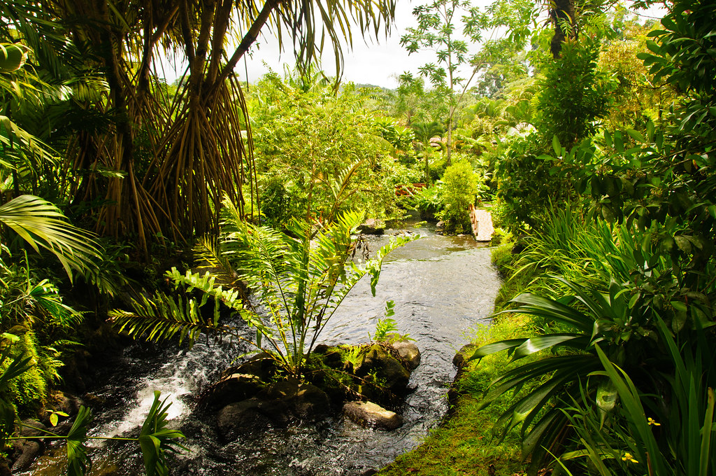 The hot stream at Tabacon