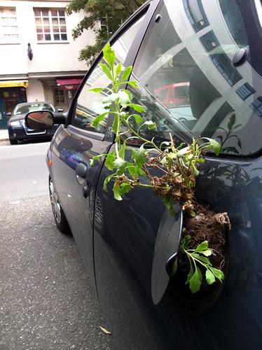 Extreme Guerilla Gardening??? by Antonia Schulz