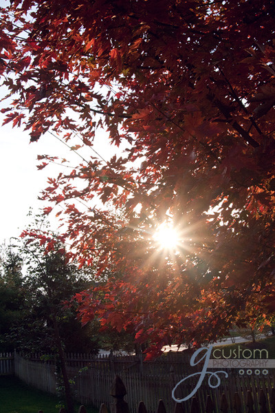 Fall sunburst
