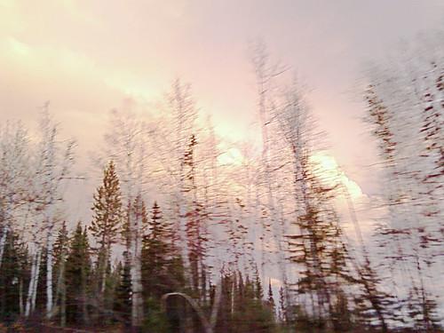Ghost Trees by Karyn Ellis