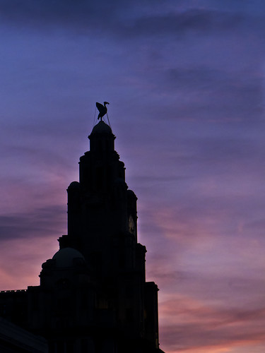 Liverbird at sunset